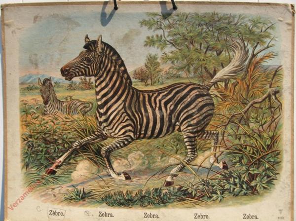 768 - Zebre, Zebra, Zebra, Zebro, Zebra